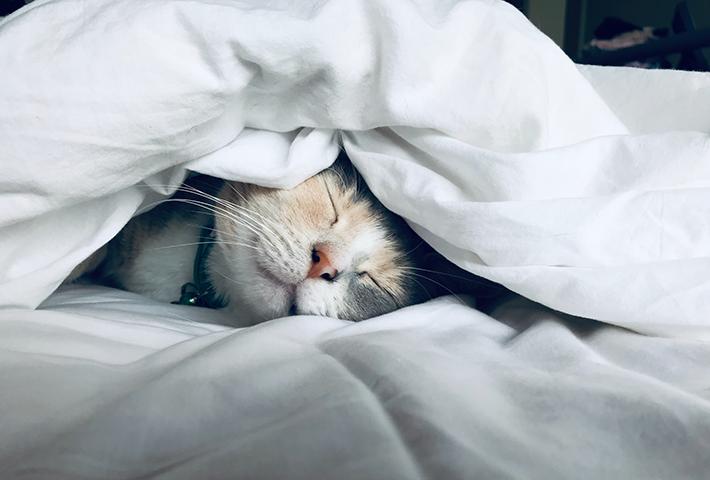 疲れを取る方法①睡眠を改善する