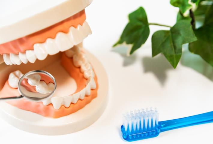 歯の健康を保つために